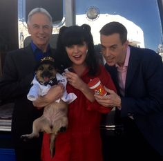 Look! One of our #NCIS rescue dogs dressed as Abby! (Her name is Clink!)
