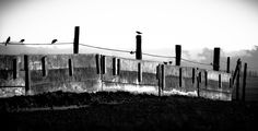 I was delighted to receive word today that my image 'Fence & Birds' was chosen for inclusion in Blue Fifth Review: Blue Five Notebook Series: blue collection 5: collaboration (Winter 2014 / 14.24)