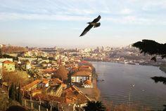 Das utopias da vida: ter asas pra desbravar o mundo (Lisboa, Portugal)