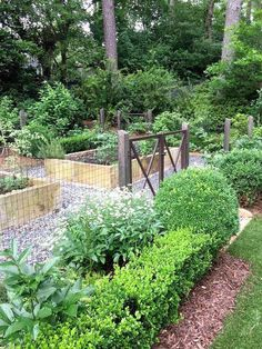 Potager garden 318137161158418851 - Vegetable garden with raised beds, fencing & boxwoods at gate – via Design Indulgence Source by Potager Garden, Veg Garden, Vegetable Garden Design, Garden Cottage, Garden Beds, Fenced Garden, Backyard Fences, Garden Fencing, Front Yard Landscaping