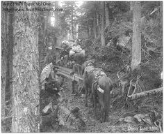 Those traveling along the Chilkoot Pass trail in 1897 didn't have an easy time. In this picture, two men are carrying a section of a boat. This light load became too heavy to haul up the mountainside, so the men sawed it in two pieces and divided the weight. The pieces of the boat were patched together again when the men reached Lake Bennett so they could float down the Yukon River to the Klondike gold fields. #AuntPhilsTrunk #AlaskaHistory #Klondike