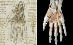"""Leonardo da Vinci's anatomical drawings were """"startling"""" in their accuracy, new medical scans have shown, putting him hundreds of years ahead of his peers. Da Vince, Scientific Drawing, Technological Change, Edinburgh Festival, Royal Collection Trust, Art Articles, Hand Photo, Anatomy Study, Ink Color"""