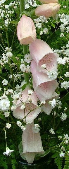 foxgloves and babysbreath
