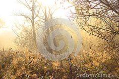 Sun and fog #sun #fog #photo #autumn #nature