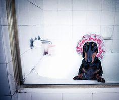 shower doxie