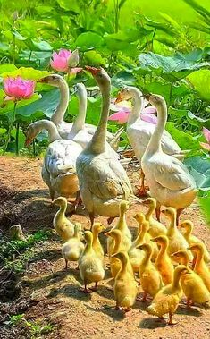 Красивые Птицы, Сельскохозяйственные Животные, Милые Животные, Фильм Прекрасные Создания, Домашние Питомцы, Домашние Птицы, Экзотические Птицы, Фотографии Животных, Разноцветные Птицы