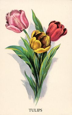 VIntage curator Amy Barickman shares a free vintage image every Friday on her bl. Botanical Flowers, Botanical Art, Botanical Illustration, Victorian Flowers, Vintage Flowers, Images Vintage, Vintage Art, Flower Images, Flower Art