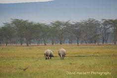 White Rhinos Lake Nakuru