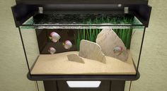 aquarium slate - Google Search Discus Tank, Goldfish Aquarium, Fish Tanks, Slate, Google Search, Chalkboard, Aquariums