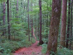 The Coontree Loop Trail in Pisgah National Forest
