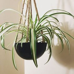 33 Modern and Elegant Vertical Wall Planter Pots Ideas Vertical Wall Planters, Diy Hanging Planter, Decorative Planters, Hanging Baskets, Planter Pots, Fiddle Leaf Fig, Water Conservation, Air Plants, Green