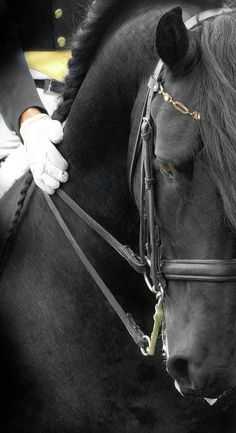 majestic black Friesian horse dressage show performace Andalusian Print by : Fran J Scott Pretty Horses, Horse Love, Beautiful Horses, Animals Beautiful, Simply Beautiful, Absolutely Stunning, Dressage Horses, Friesian Horse, Andalusian Horse
