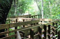 Zig Zag Boardwalk, Lettuce Lake Park   Tampa, Florida    ...