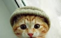 Another cat in a hat http://ourlondontaxi.blogspot.com/2012/01/shameless-blog-traffic-competition.html#.TxwIoZe_-3I