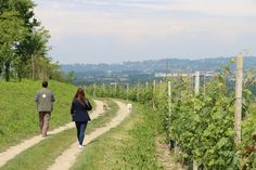 Walking through the vines, truffle hunting and sipping wine. Bliss.