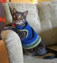 1000 images about cat sweaters on pinterest cat - Cat jumper knitting pattern ...
