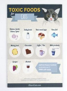 Cats can be picky eaters, and sometimes it feels like they desire a gourmet meal catered by a world famous chef. With how cute they are, how can we possibly refuse them even our own food? But, there are some foods that are surprisingly toxic for your cat! This informative magnetic guide tells you common household foods that are unhealthy for your cat. Keep it posted on your refrigerator to remind yourself of what Whiskers can't have, and save him/her from a potentially dangerous situ...