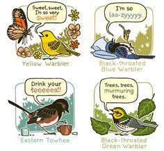 Bird Sound Mnemonics Print by TopatoCo #Illustration #Bird_Sound #Mnemonic