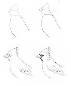 Draw a Cardinal | Art class ideas