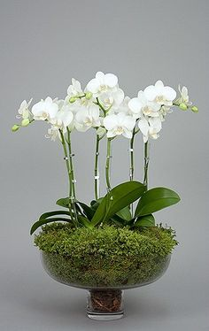 I would love  couple of white orchids (real or silk) to arrange in a glass or white footed tureen with moss