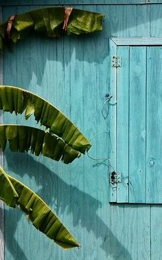 blue house and banana tree newer older providencia island colombia so maybe my idea of the aquaturquoise color will work with the dark green