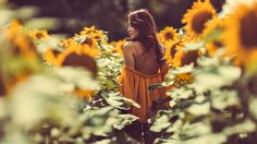 SUNFLOWERS by Andrea Fleckenstein on 500px