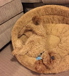 camouflage-animals-pets-funny-3__880----------This pooch is the same color as his doggie bed, so makes it harder to see..... But, the pooch is still there.....