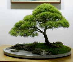 ֍♥I love this pretty #bonsai!♥♦ #BonsaiInspiration