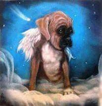 Image result for boxer dog as a angel