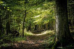 Tormafölde melletti ősbükkös erdő