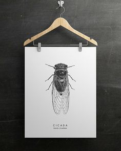 Cicada Insect Art PRINTABLE FILE. Modern Vintage by ILKADesign