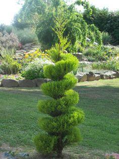 spirals in nature | topiaire : Fleurs de jardin..