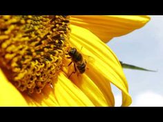 Why bees need our help