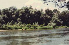 Ártéri bokorfüzes és puhafás ligeterdő (Turcsányi Gábor felvétele) River, Outdoor, Outdoors, Outdoor Living, Garden, Rivers
