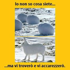 31 Solutions People Came Up With To Try To Protect Themselves From Coronavirus Funny Animal Memes, Funny Facts, Funny Animals, Cute Animals, Funny Video Memes, Videos Funny, Funny Photos, Funny Images, Italian Memes