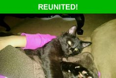 Great news! Happy to report that Moon has been reunited and is now home safe and sound! :)