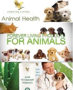 Aloë Vera ook voor dieren! https://shop.foreverliving.com/retail/entry/Shop.do?store=NLD&language=nl&distribID=310002057252