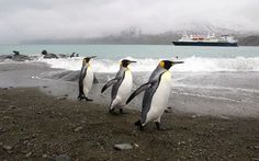 I have been to the Antarctic Peninsula on the National Geographic Explorer. Most amazing thing in my life. I learned so much about myself and our beautiful planet!