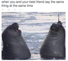 """"""" pleatedjeans: """" Seal with a data-logger on it's head. [x] """"LOOK! LOOK! I'M A NARWAL!"""" """" I've been laughing for about 20 minutes now """" Funny Posts, Funny Memes, Funny Stuff, Funny Things, Random Stuff, Funny Quotes, Funniest Memes, Relatable Posts, Bffs"""