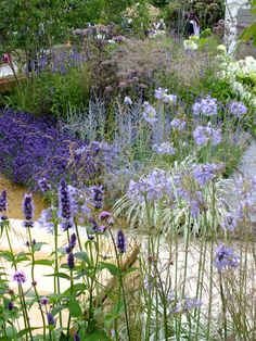 RHS Hampton Court Palace Flower Show – my favourite Show Gardens Hampton Court Flower Show, Rhs Hampton Court, Plant Design, Garden Design, Gaura, Mayfield Lavender, Hampton Garden, Chelsea Flower, Landscaping With Rocks