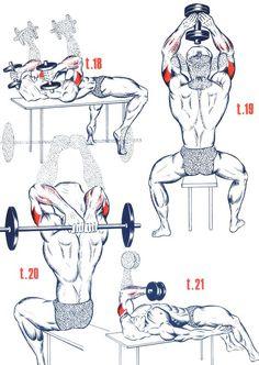 Triceps4