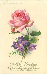 Pink rose & violets