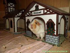 Facebook post by Meerschweinchen von den Ilmtal Pfötchen - I want this cute little cottage for my piggies!