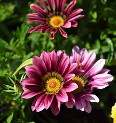 Plants, Inspiration, Flora, Planters, Biblical Inspiration, Inspirational, Inhalation