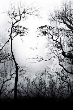 Gesicht aus Bäumen, optische Täuschung
