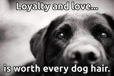 Loyalty and love is worth every dog hair.