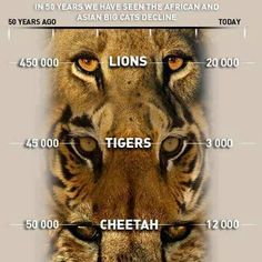 trophy hunting - Google Search