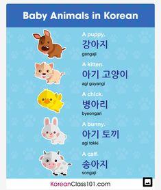 Baby Animals in Korean Korean Words Learning, Korean Language Learning, Learning Arabic, Learning Languages Tips, Foreign Languages, Korean Lessons, Chinese Lessons, French Lessons, Spanish Lessons