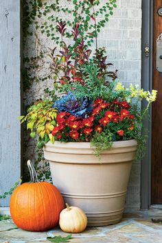 Best Ideas for Fall Container Gardening: Tennessee and Great Smoky Mountains Regional Container