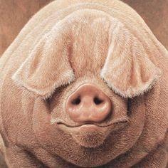 My ears melted?: Peekaboo Pig